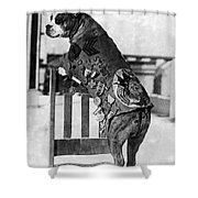Wwi, Sergeant Stubby, American War Dog Shower Curtain