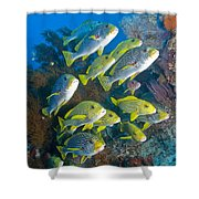 Yellow And Blue Striped Sweeltip Fish Shower Curtain by Mathieu Meur