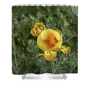Yellow And Orange Poppy Shower Curtain