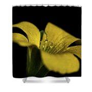 Yellow Clover Shower Curtain