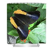 Yellow-edged Giant Owl Butterfly #6 Shower Curtain