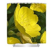Yellow Evening Primrose Shower Curtain