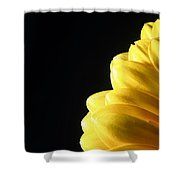 Yellow Gerbera Flower Shower Curtain