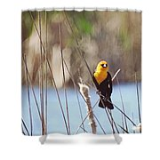 Yellow-headed Blackbird Shower Curtain