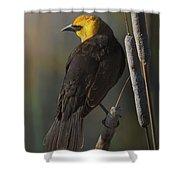 Yellow Headed Blackbird On Cattails Shower Curtain