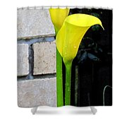 yellow Lily. Shower Curtain