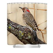 Yellow-shafted Northern Flicker Shower Curtain