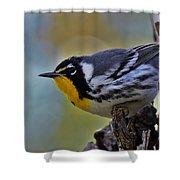 Yellow Throat Warbler Shower Curtain
