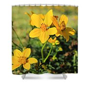 Yellow Wildflowers In A Field Shower Curtain