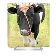 Young Bull In A Field Shower Curtain
