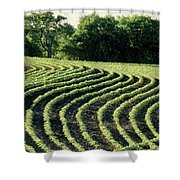 Young Soybean Plants Shower Curtain