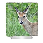Young White-tailed Buck In Velvet Shower Curtain