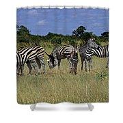 Zebra Group Shower Curtain