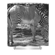 Zebra In Black And White Shower Curtain