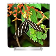Zebra Longwing On Firebush  Shower Curtain