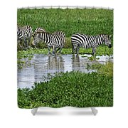 Zebras In The Swamp Shower Curtain