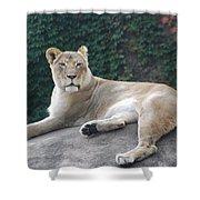 Zoo Lion Shower Curtain