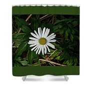 10-15-16--4996 Montauk Daisy Don't Drop The Crystal Ball Shower Curtain