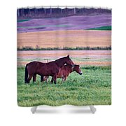 Horses Of The Fall Shower Curtain
