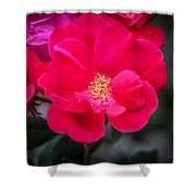Knockout Roses Painted  Shower Curtain