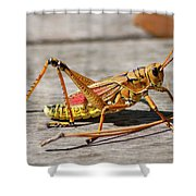 10- Lubber Grasshopper Shower Curtain