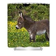Miniature Donkey Foal Shower Curtain