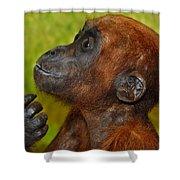Monkey Shower Curtain