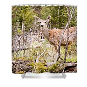 Mule Deer In The Pike National Forest Of Colorado Shower Curtain