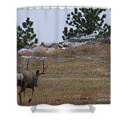 10 Point Buck Heads West Shower Curtain