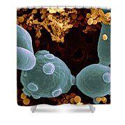 Saccharomyces Cerevisiae Shower Curtain