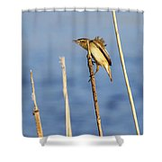 Sedge Warbler Shower Curtain