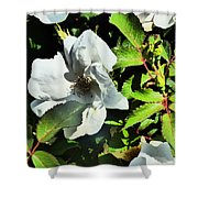 Sounds Of Summer Shower Curtain