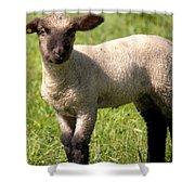 Spring Lamb Shower Curtain