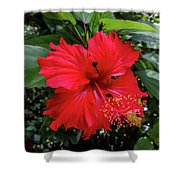 The El Yunque National Forest, Puerto Rico Shower Curtain