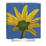 Wild Sunflower Stony Brook New York  Shower Curtain