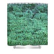 100134 Uluhe Ferns Hawaii Shower Curtain