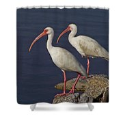 100b5790 White Ibis Shower Curtain