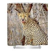 1022 Cheetah Shower Curtain