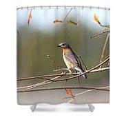 105319 - Bluebird Shower Curtain