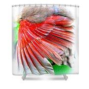 1055-001 - Northern Cardinal Shower Curtain