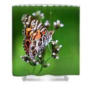 1074- Butterfly Shower Curtain