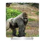 10899 Gorilla Shower Curtain