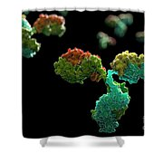 Antibody 1igt Shower Curtain