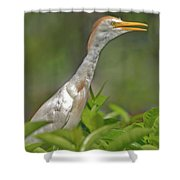 11- Cattle Egret Shower Curtain