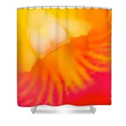 Into Cattleya Orchid  Shower Curtain
