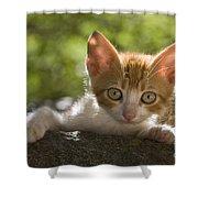 Kitten On A Wall Shower Curtain