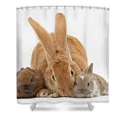 Rabbits Shower Curtain by Mark Taylor