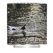 White-throated Dipper Shower Curtain