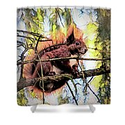 11451 Red Squirrel Sketch Shower Curtain