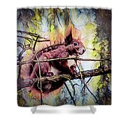 11452 Red Squirrel Sketch Square Shower Curtain
